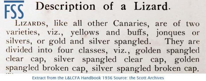 Lizard Classification L&LCFA 1936-FSS