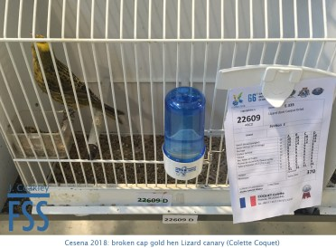 Cesena 2018 BCGH Colette Coquet-FSS