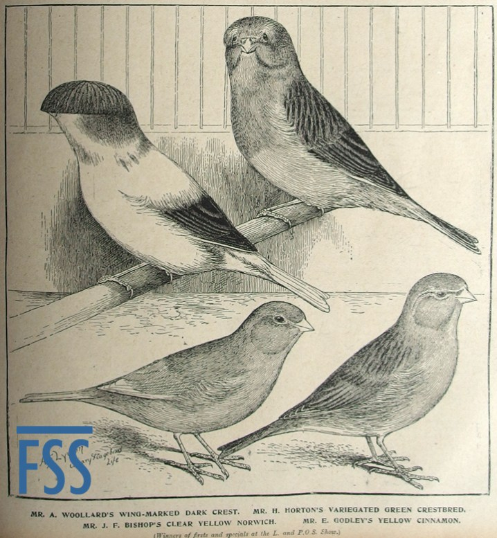 Crest and Crest-bred canaries