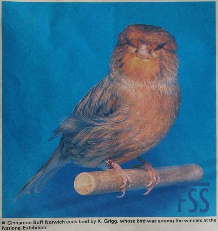 Ken Grigg cinnamon Norwich canary