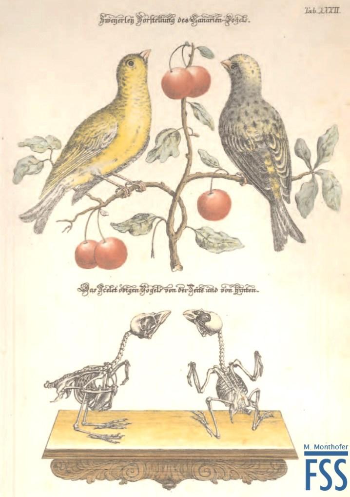 Johann Daniel Meyer canaries