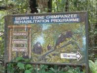 takugama il santuario degli scimpanzé (9)