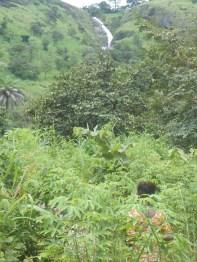 La giungla