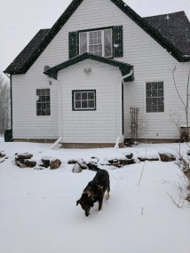 Just this week, our house and Merlin in the snow