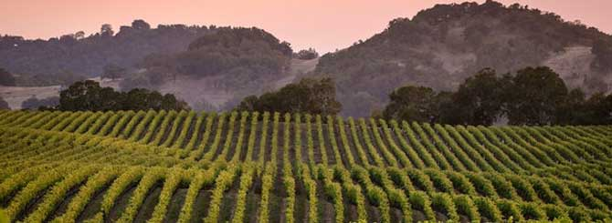 Explore Emerging U.S. Wine Regions
