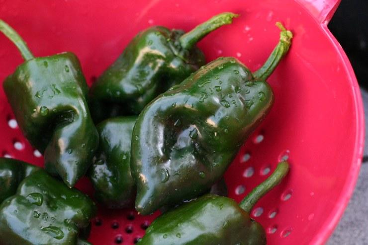 Poblano pepper