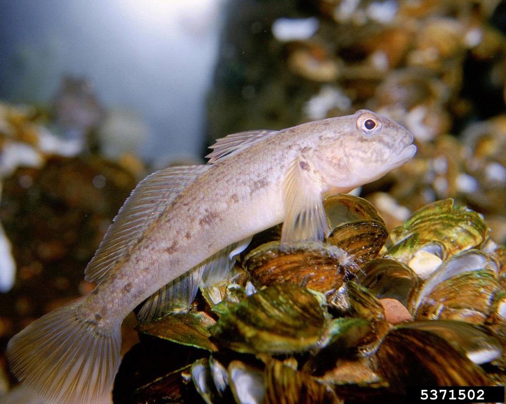 Fish Fresh New York