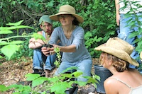 Save $400 on tuition for our summer Permaculture Design Certificate course.