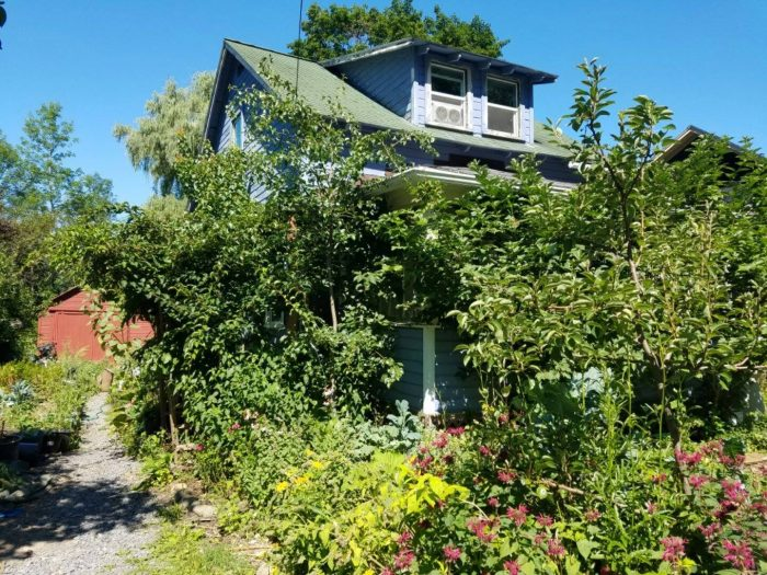 South Meadow Urban Oasis: Tours. Sunday, 12:30-1:30pm on 8/26/18