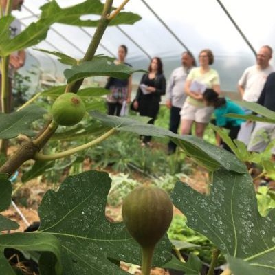 Jonathan Bates of Food Forest Farm taught a workshop called Mediterranean Abundance: Figs & Artichokes in Cold Climates.