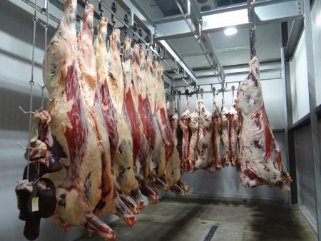 도살장 냉동창고 - 동물들을 학살하는 인간 - 객관적인 도덕