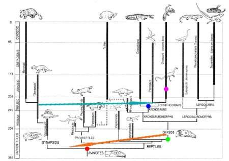 파충류의 계통 나무 - 화석의 부재