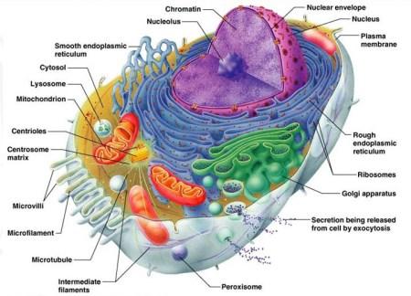 세포의 복잡성 - 하나님 창조의 증거