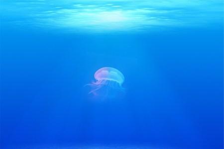 신비한 바다의 해파리