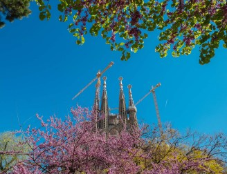 Sagrada Familia with trees
