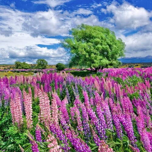 Colorfull flowers in New Zealand