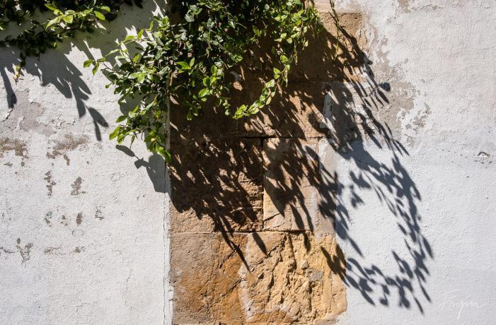 portugal shadow flowers