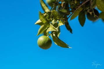 Lemon blue sky