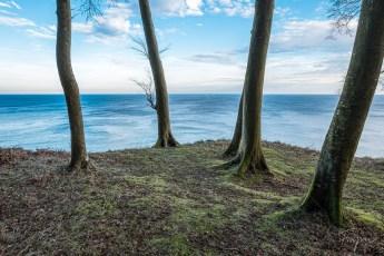 Blick auf das Wasser durch mehrere Bäume im Jasmund Nationalpark