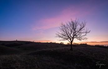Ein Baum bei Gegenlicht und Sonnenuntergang
