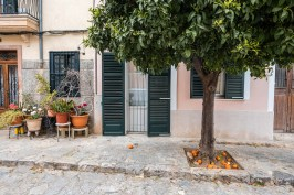 An orange tree on front of an traditional house on the island of Mallorca