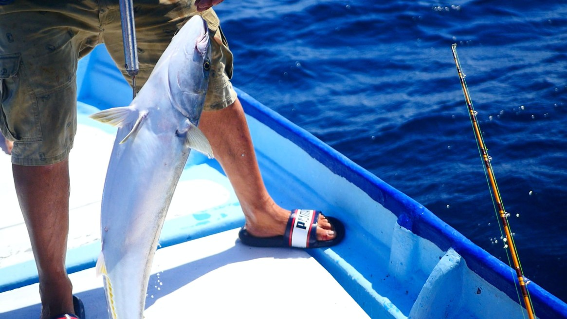 best lures for California Yellowtail
