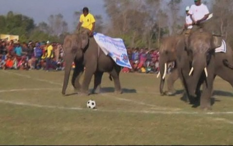 FFútbol nepalí con elefantes