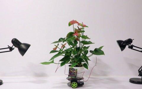 """Planta Cyborg que """"controla"""" un robot para moverse hacia la luz"""