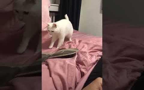 Sacándole partido al bug del gato