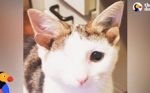 El gato con un ojo pero... CON 4 OREJAS