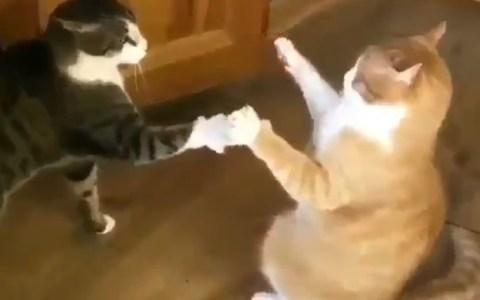 El gato de Eduardo Inda