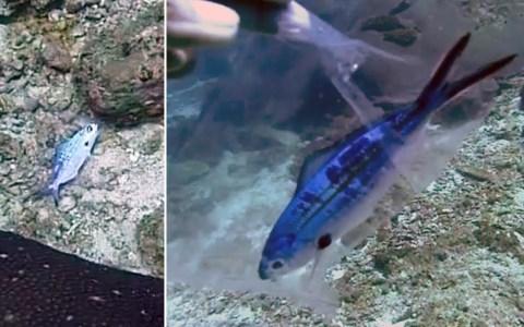 Llevamos tanto tiempo pescándolos, que los peces han evolucionado y ya nacen envasados