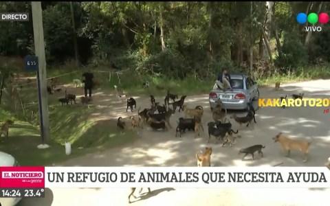 Reportero en apuros dentro de un refugio de animales