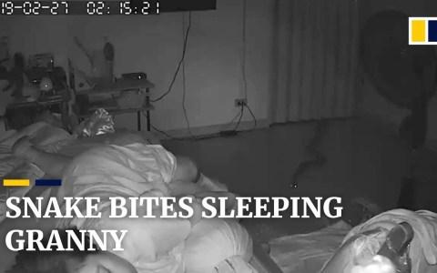 Una pesadilla hecha realidad: que una serpiente enorme entre en tu habitación y te muerda mientras duermes