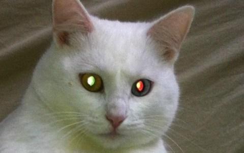NYBBLE: el primer gato de código abierto