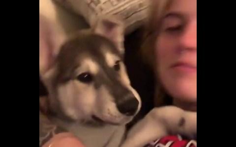 ¿Es esto la risa de los perros?