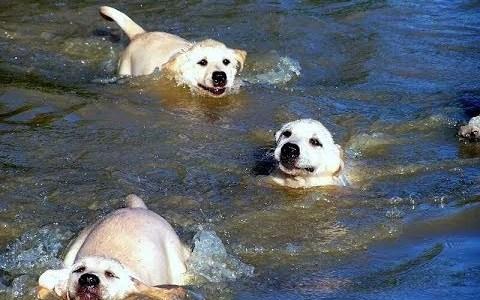 Padre perruno se lleva a sus cachorretes a darse su primer baño
