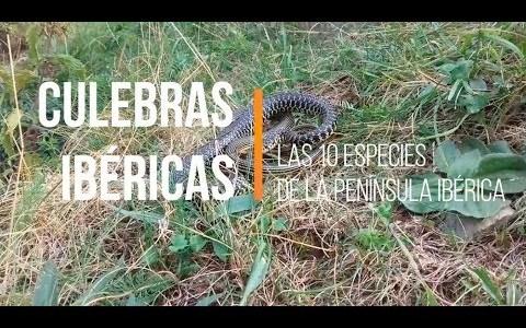 Las 10 especies de culebras que podemos encontrar en la Península Ibérica