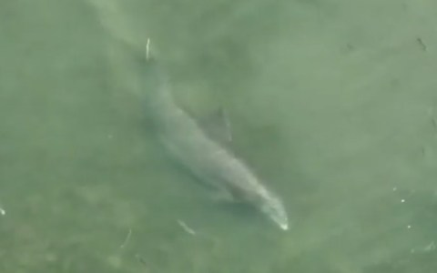 """Un delfín haciendo """"caza recreativa"""""""