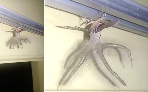 Extraña criatura con alas y tentáculos vista en Bali