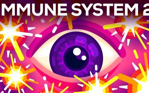 Las pequeñas bombas en tu sangre: El sistema inmunológico complementario