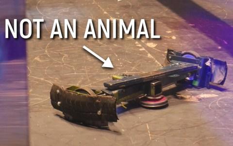 """No, no es coña: Youtube está borrando vídeos de peleas de robots por """"crueldad animal"""""""