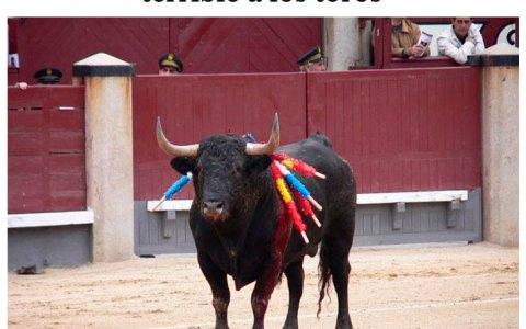 Sí, los toros sí sufren, y mucho