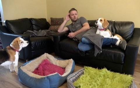 Y así es intentar echarte una siesta teniendo dos Beagles en casa