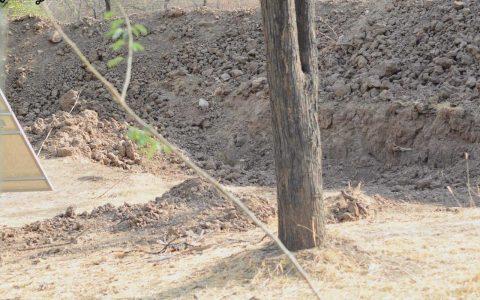 ¿Puedes ver el leopardo?