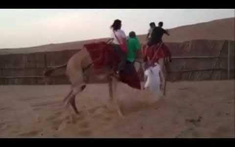 Espero que el camello se encuentre bien :c