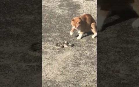 Gato vs serpiente: FIGHT!