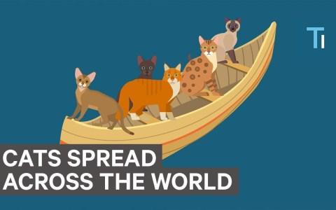 ¿Cómo se esparcieron los gatos por el mundo?
