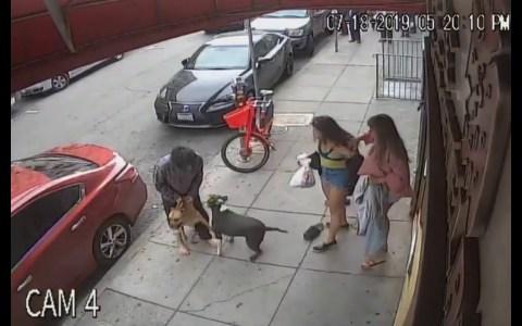 Dos perros atacan a uno más pequeño en plena calle