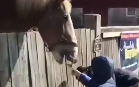 El caballo engancha
